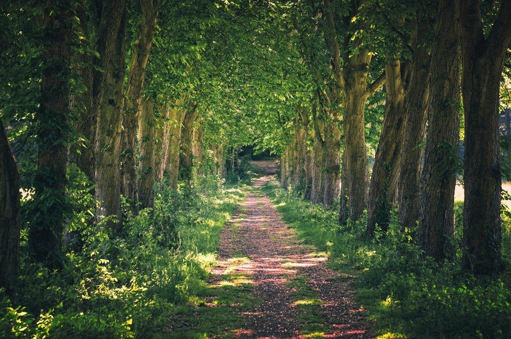 Tree lined walking trails