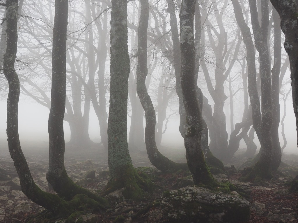 Spooky forest setting covered in fog