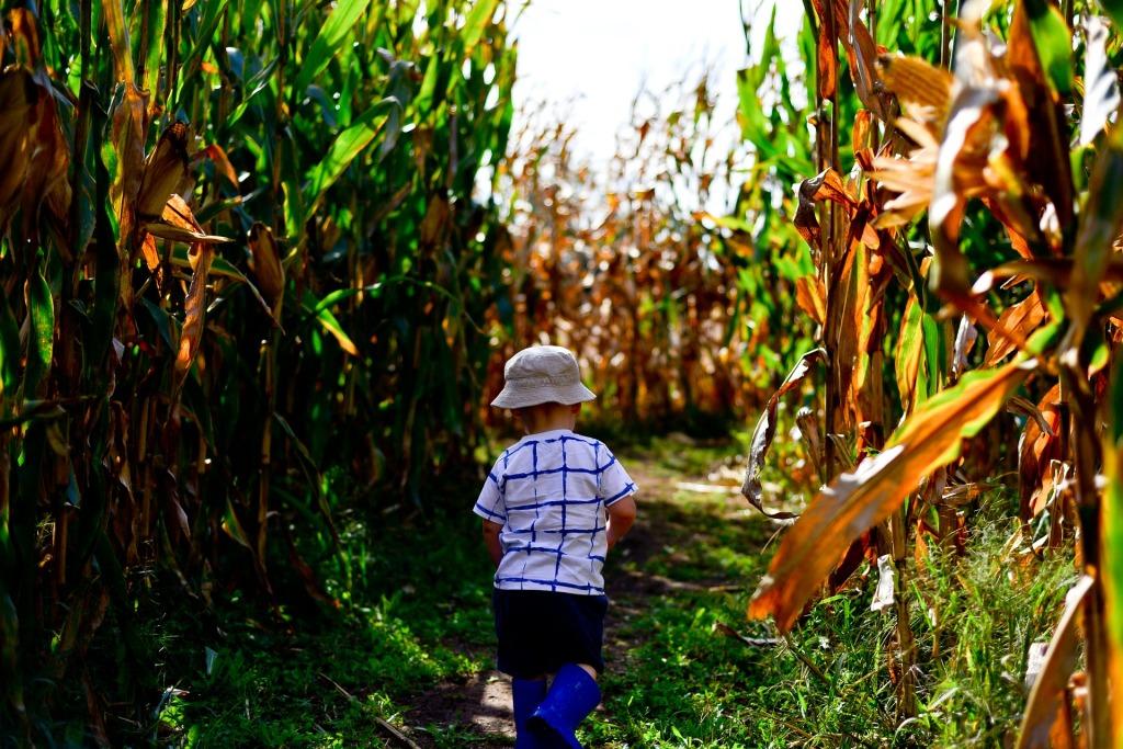 Child running in corn maze